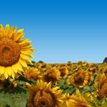 ecoConsort AG Orderschuldverschreibungen Erfahrungen